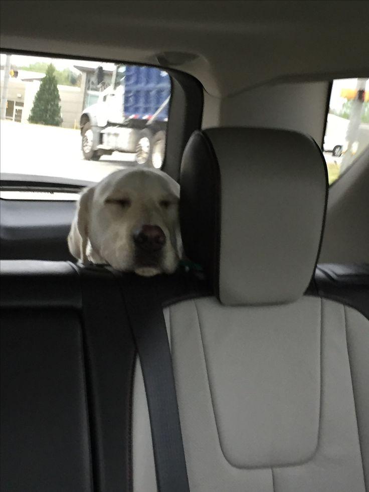 """""""Riding makes me so sleepy."""""""