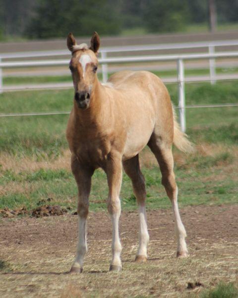 503 Best Images About Quarter Horses
