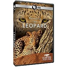 Revealing the Leopard: Leopards are the ultimate cat. They are the most feline, the most intelligent, the most dangerous, and, until recently, one of the least understood. This film will accumulate the evidence and put together a psychological profile of this extraordinarily cunning cat. From the Middle East and North Africa to the island of Sri Lanka, we'll learn how these cats rarely move without a completely pre-meditated strategy.