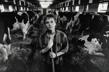 billede 1: Landbrugsmedhjælper i ko-stald