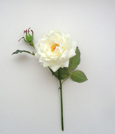 Best yorkshire rose ideas on pinterest the