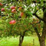 Los mejores cultivos para el otoño-invierno
