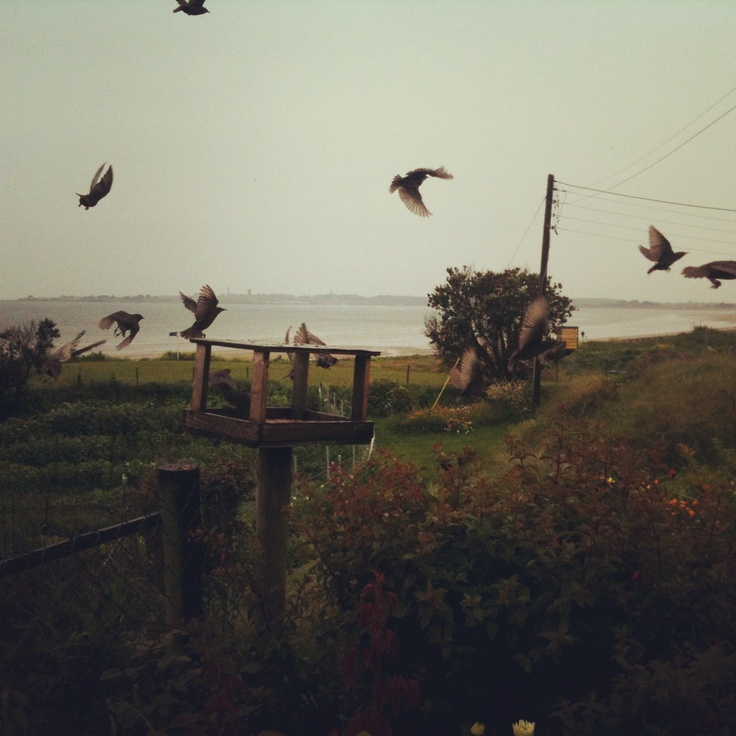 #The Birds. By www.crypticvisionphotography.com
