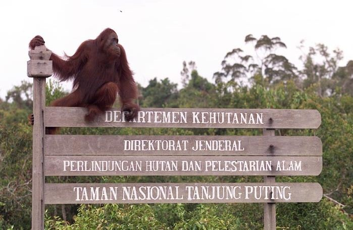 Plan petunjuk kawasan taman nasional tanjung puting - kalimantan tengah