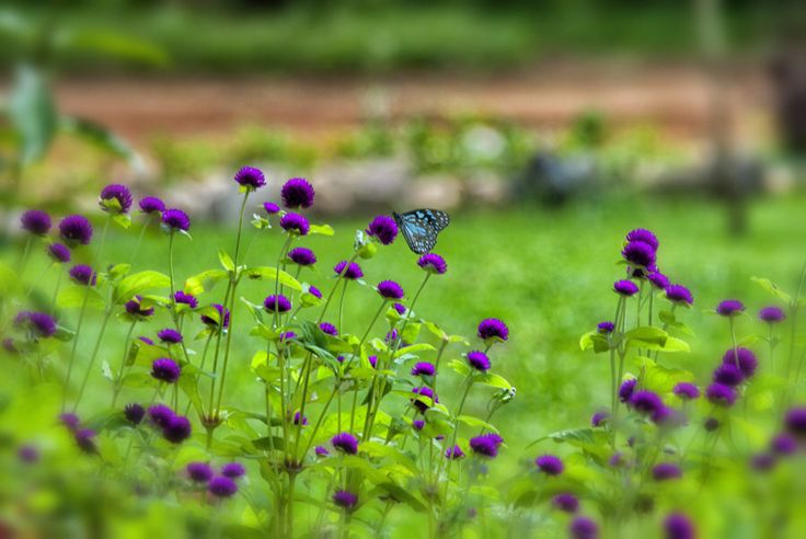 Bilde fra http://fc05.deviantart.net/fs70/i/2012/186/1/4/nature__s_beauty_sri_lanka_by_nayana_deshapriya-d561xxq.jpg.