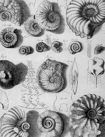 """Seventeenth century illustration of ammonoid fossils (Cornua ammonis, or """"snake stones"""") drawn by Robert Hooke, father of microscopy and paleontology in Britain, 1703"""