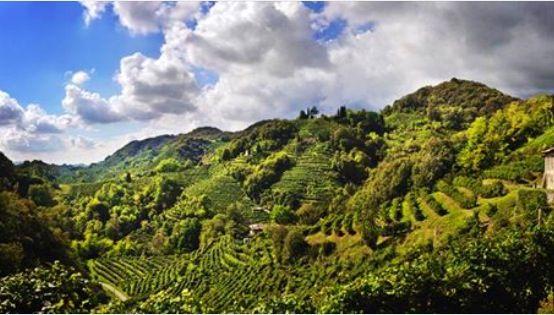 Le colline del trevigiano, precisamente Valdobbiadene terra del prosecco docg!!!