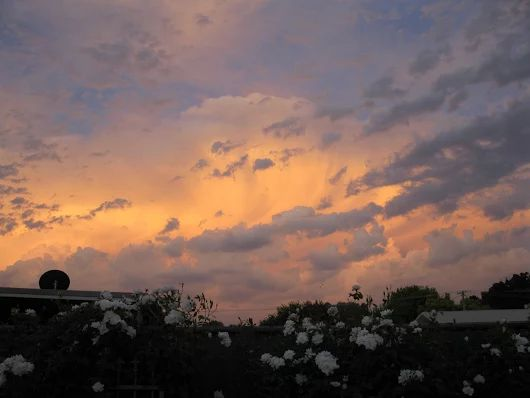 Sunset, Cootamundra