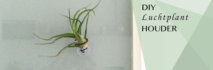 DIY houder voor op glas, spiegel of de tegels  | Luchtplantjes