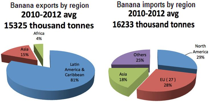 Crisis in banana trade?  a new menace is emerging that has no cure – yet:  the fungus known as Panama disease TR4. Some people think it could wipe out the Cavendish variety altogether.