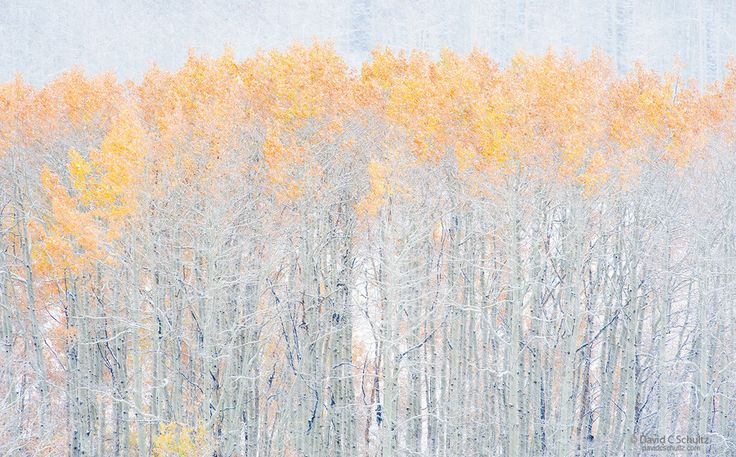 Autumn Blizzard by David C. Schultz on 500px