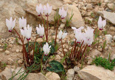 Süs bitkileri çiçekler doğadan - Google'da Ara