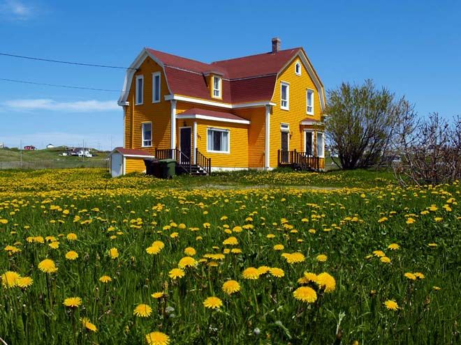 A gorgeous scene of yellow on yellow in the Magdalen Islands, Quebec