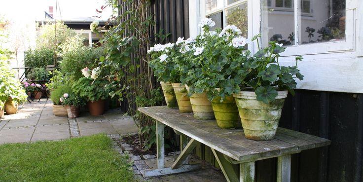 Her på siden af det lille sortmalede skur med de smukke vinduer står en gammel bænk med 5 ens, patinerede potter med pelargonier. Jeg er vild med det! Det må være mængden, det gør det så virkningsfuldt!