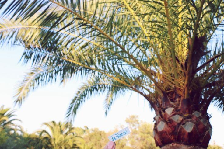 die Palme - palm tree