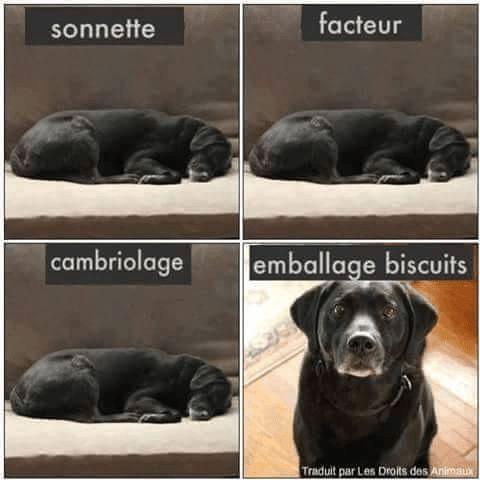 Like si t'as le même à la maison ! http://www.15heures.com/joke/By7z #CUTE