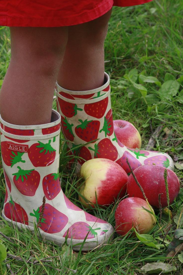 Kom appels plukken in september en oktober.