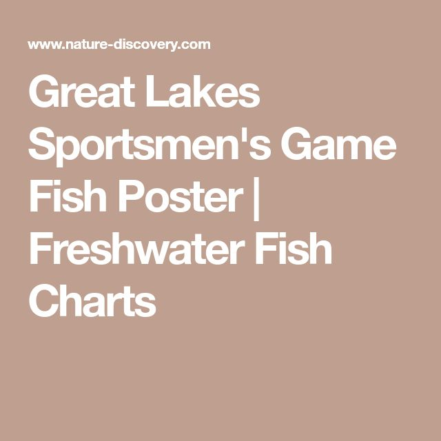 Great Lakes Sportsmen's Game Fish Poster | Freshwater Fish Charts