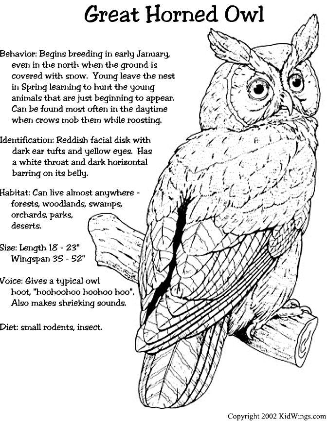 90 besten Nature: Birds: owls 2 Bilder auf Pinterest   Eulen ...