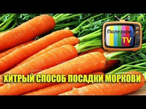 Как правильно посадить морковь - YouTube