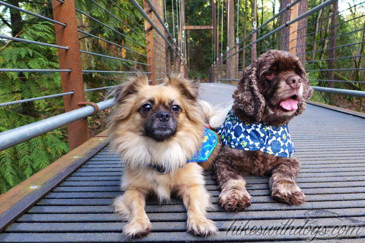 Hiking with dogs at Wilburton Hill Park / Bellevue Botanical Garden in the Puget Sound Region.