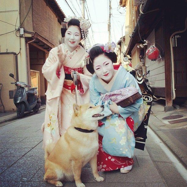 「ねぇ、まると賀茂川で等間隔してくれる?」 Maiko (舞妓) is an apprentice geisha in western Japan, especially Kyoto. Their jobs consist of performing songs, dances, and playing the shamisen (three-stringed Japanese instrument) for visitors during feasts. Maiko are usually aged 1 by marustagram on Flickr.