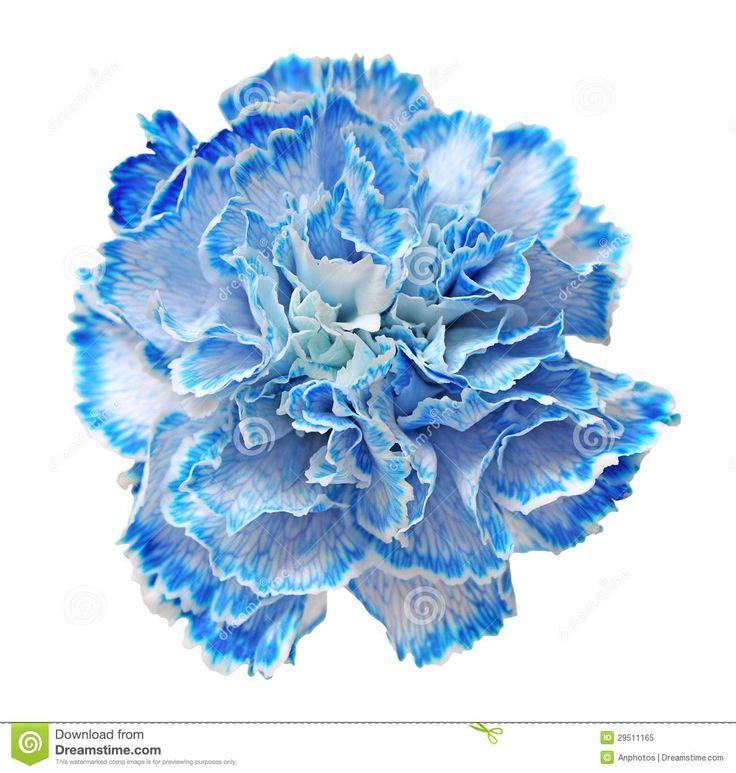 blue carnation bouquet - Google Search
