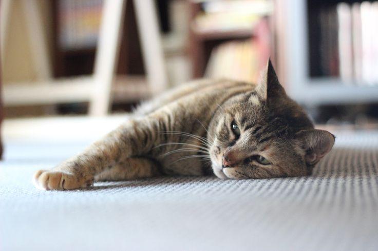 """Foto """"Napping Cat"""" da zaimoku_woodpile  #OGQ"""