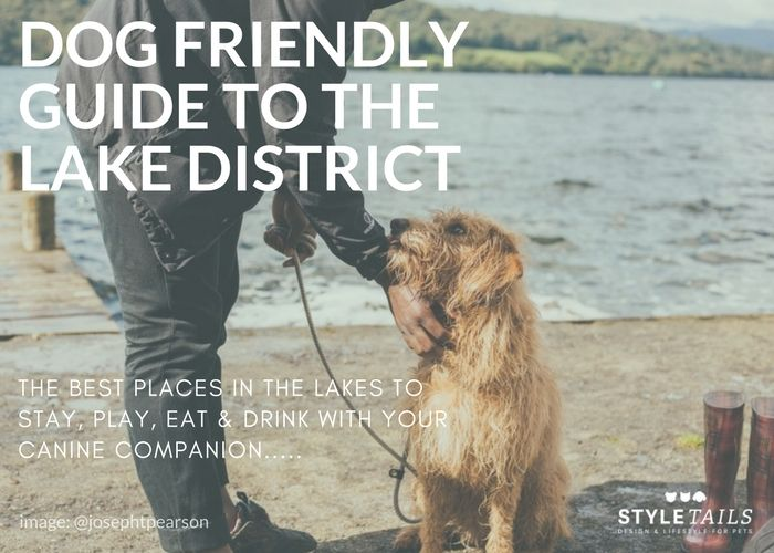 Your Definitive Dog Friendly Guide To The Lake District Lake District Dog Friends Dog Friendly Hotels