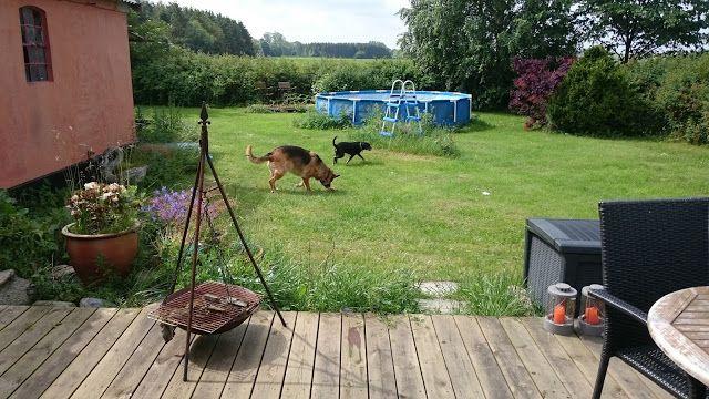 Mit hundeliv med Vaks.: Hygge / Cosiness
