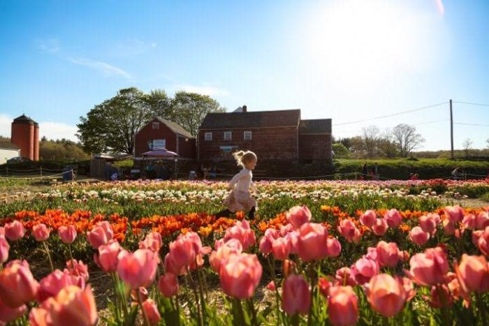 A Trip To Rhode Island's Neverending Tulip Field Will Make Your Spring Complete
