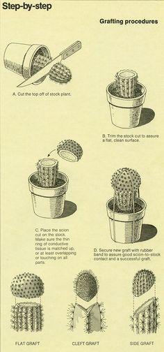 badminton:    hauntedwoods:alextyson:The World of Cactus  Succulents (1977) B-D