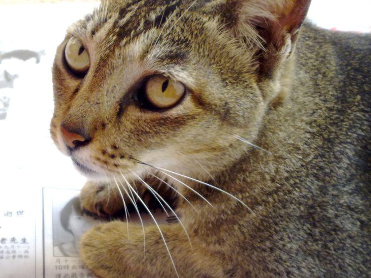 http://www.bubblews.com/news/2859704-do-you-treat-your-pet-as-a-family-member-or-a-show-off-pet
