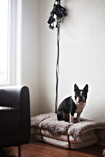 dog bed with fur & beltsBoston Terriers Love, Dogs Beds, Pets Beds, Doggie Beds, Baby Beds, Pet Beds, Dog Beds, Leather Belts, Diy Dogs