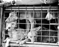 PETITION ~Help Make Purchasing Puppies/Kittens from Pet Shops Illegal