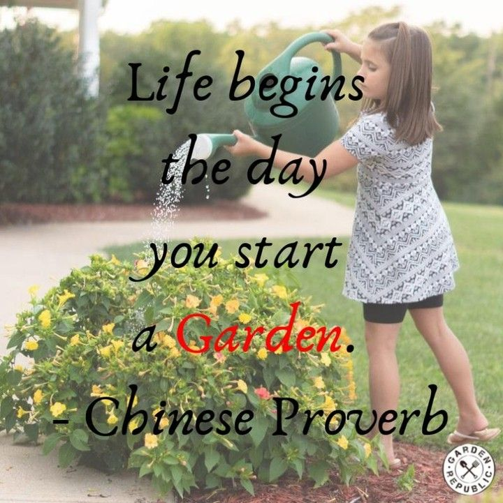 Life Begins The Day You Start A Garden Chinese Proverb How Does The Art Of Gardening Plant A Seed In You Starting A Garden Chinese Proverbs Garden Plants