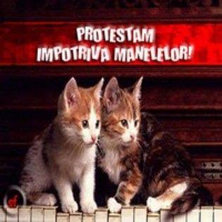 i181338446_75902_7[1] - poze pisici haioase