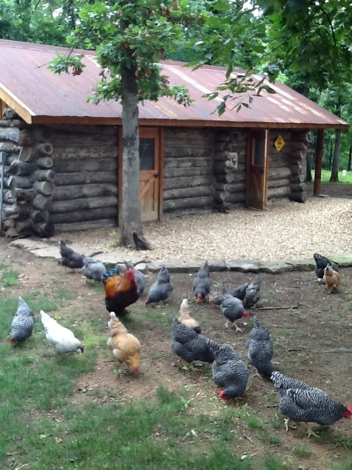 17 best images about hen houses on pinterest portable for Can ducks and chickens share a coop