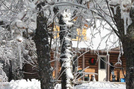 Wilderness cabin as seen through the ice covered trees.