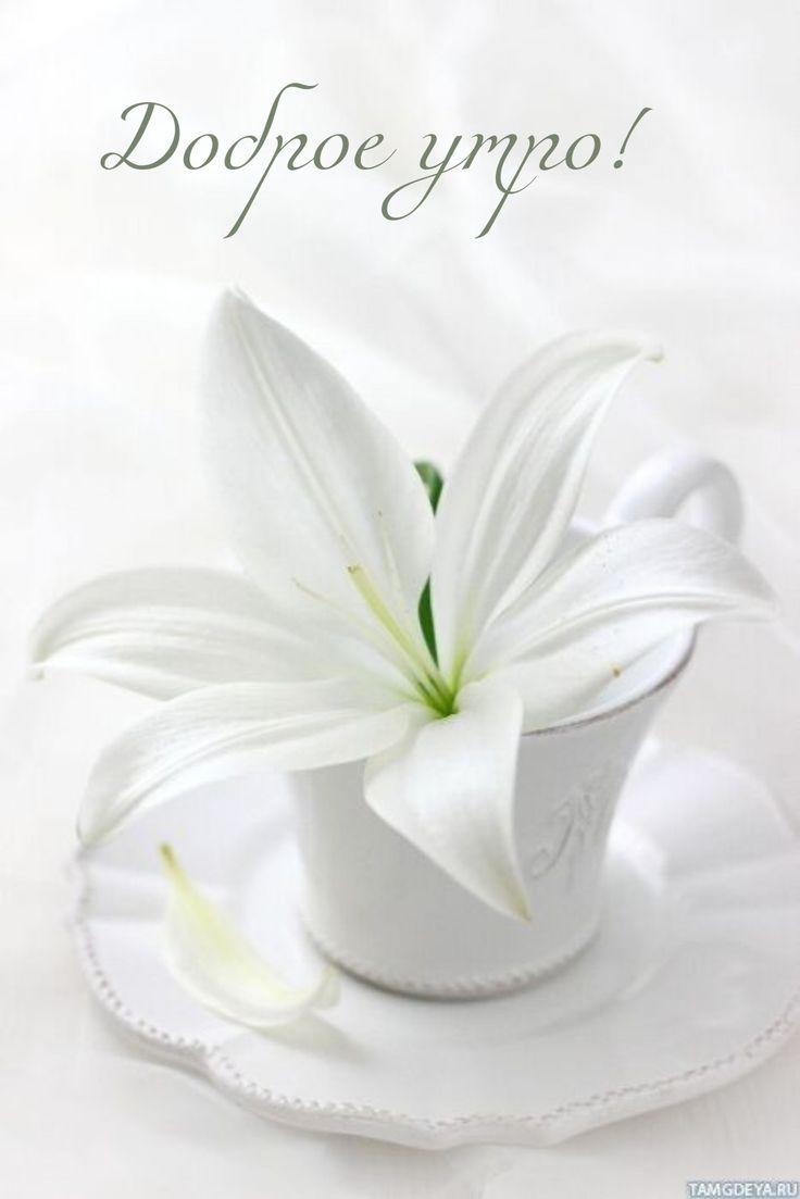 Мужу годовщиной, картинки с лилиями и надписью доброе утро