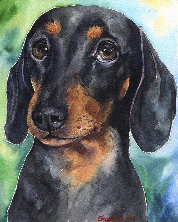 рисунки такса собака предки