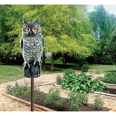 This Bird-X Great Horned Owl Decoy with Reflective Eyes lets you harness the predatory power of the great horned owl. This realistic 16in., highly visible decoy scares off small birds, rodents, small animals and other pests. Its sparkling, mirror-backed eyes and bright, reflective markings will protect your property from annoying pest birds. Made of durable ABS plastic.