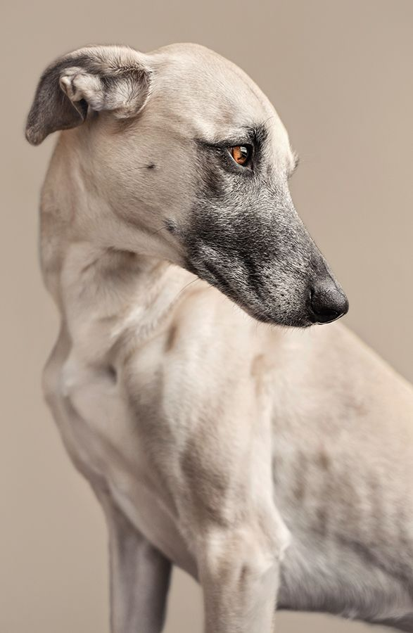 Elke Vogelsang is a Hildesheim based, portrait, horses, editorial pet photographer. Hildesheim Hannover Hanover Braunschweig, Göttingen, Hameln, Celle, Hamburg, Germany, pet photography.
