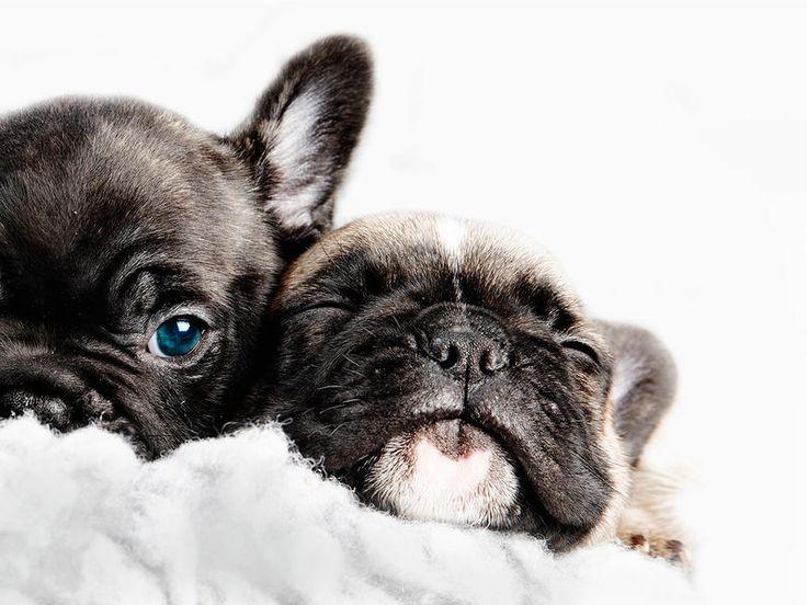 ¡Qúe lindos! #Cachorros, #Perros #mascotas