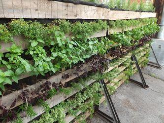 1000 id es sur le th me jardins potagers verticaux sur for Le jardin urbain garderie