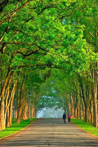 Taiwan......aah, a lovely cool place to take a  walk and refresh the senses.