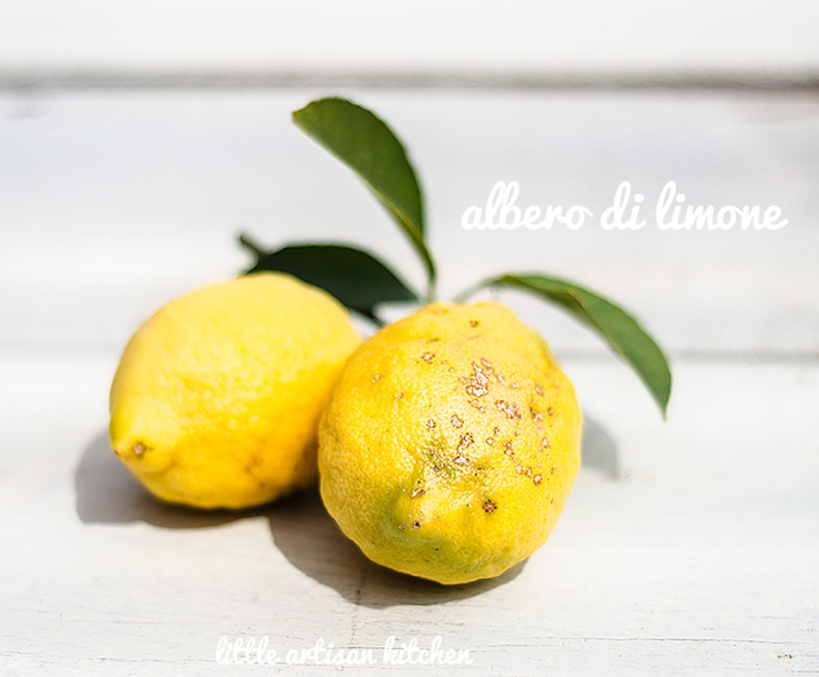albero di limone by Little Artisan Kitchen