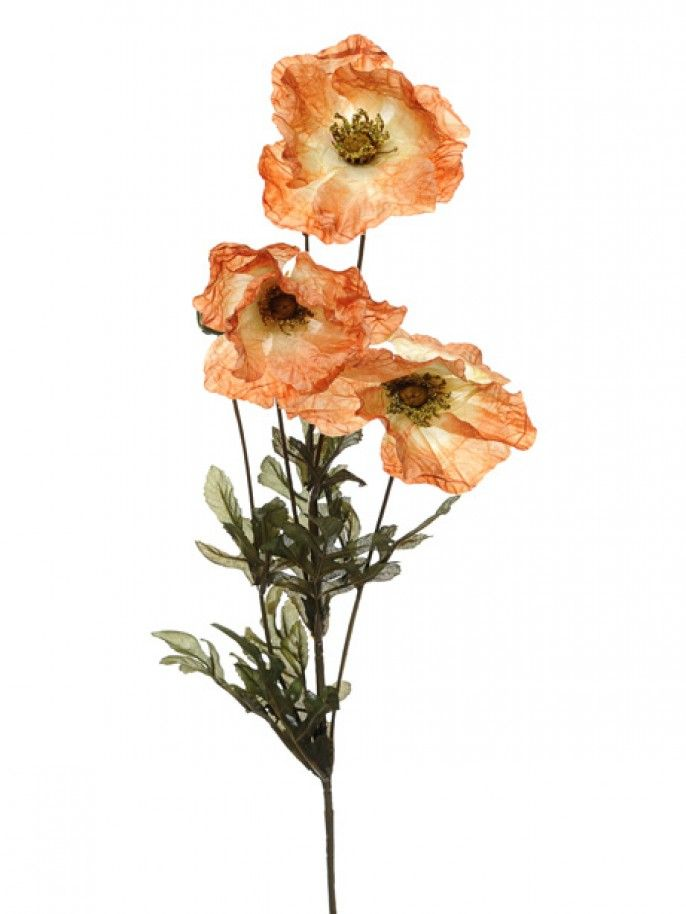Amber Poppy - Brown #poppies