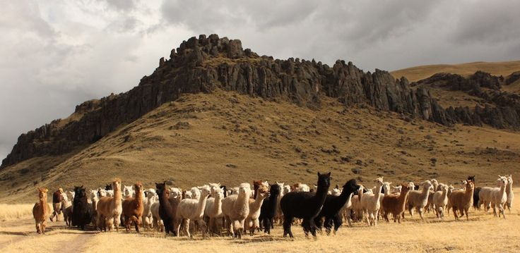 Amano yarns. Inspiration in the Andes. Natural colors. Alpacas. Puyu yarn. Pattern Book Vol. 2. Made in Peru.