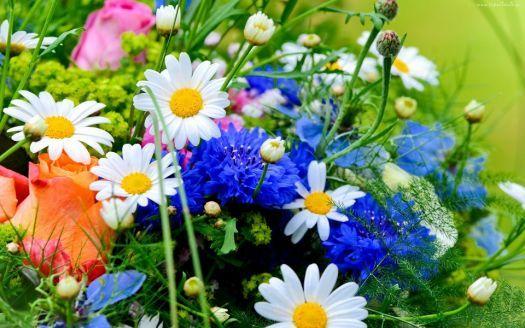 barevné květiny - colorful flowers (96 pieces)